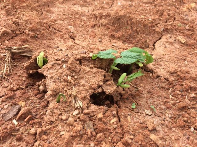 Seed breaking ground.jpg